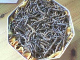 Winterworms1